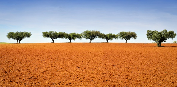 Landscape with cork trees and red earth.