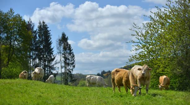 Landschaft in der Eifel in Deutschland – Foto