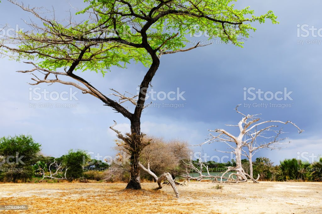Landscape  in the Selous Game Reserve,Tanzania stock photo
