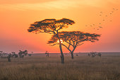 An early morning shot , this photo was taken during my game drive safari in Serengeti National Park, Tanzania. The  sunrise was so amazing with red and orange colour.