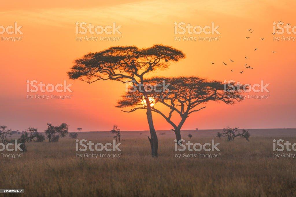 Un paysage dans le parc national de Serengeti, tôt le matin avec le lever du soleil scence. - Photo