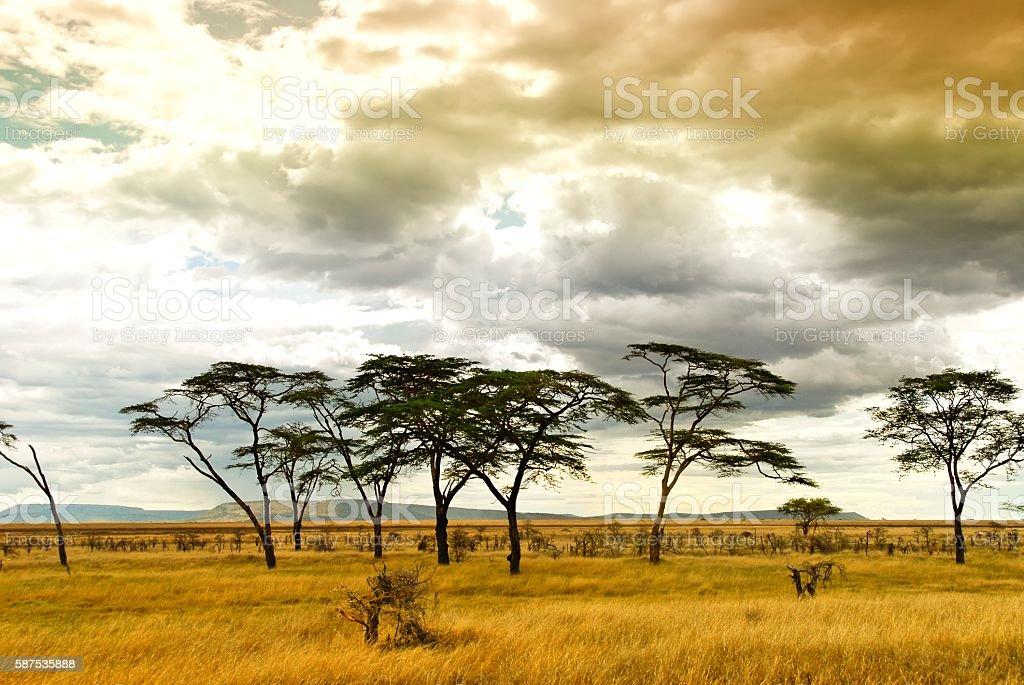 Landscape in the Serengeti National Park,Tanzania stock photo