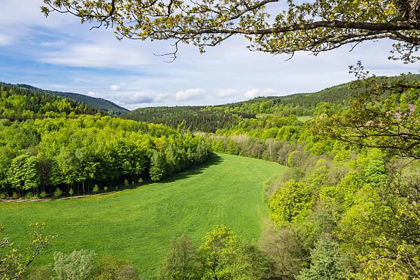 landscape in the thuringian forest with trees and meadow - wettervorhersage deutschland stock-fotos und bilder