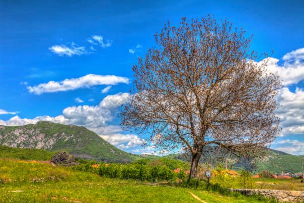 Landschaft in der Nähe von berane – Foto