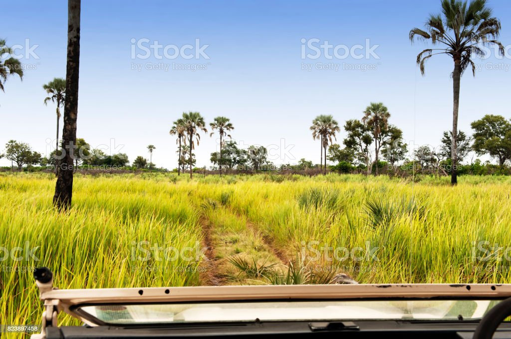Landscape in the Xigera Concession ,Moremi wildlife reserve  in Botswana stock photo