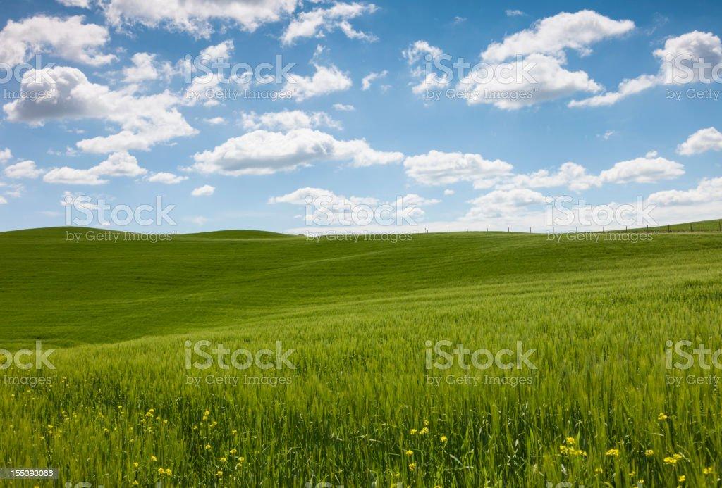 Landscape in Tuscany, Italy royalty-free stock photo