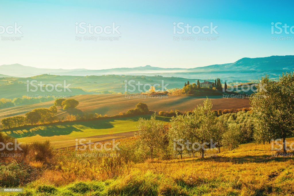 Landscape in Tuscany with olive tree plantation stock photo