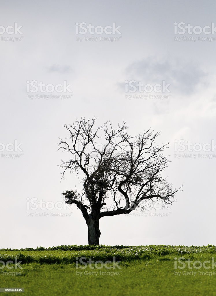 Landscape, Lonely tree in a green meadow royalty-free stock photo