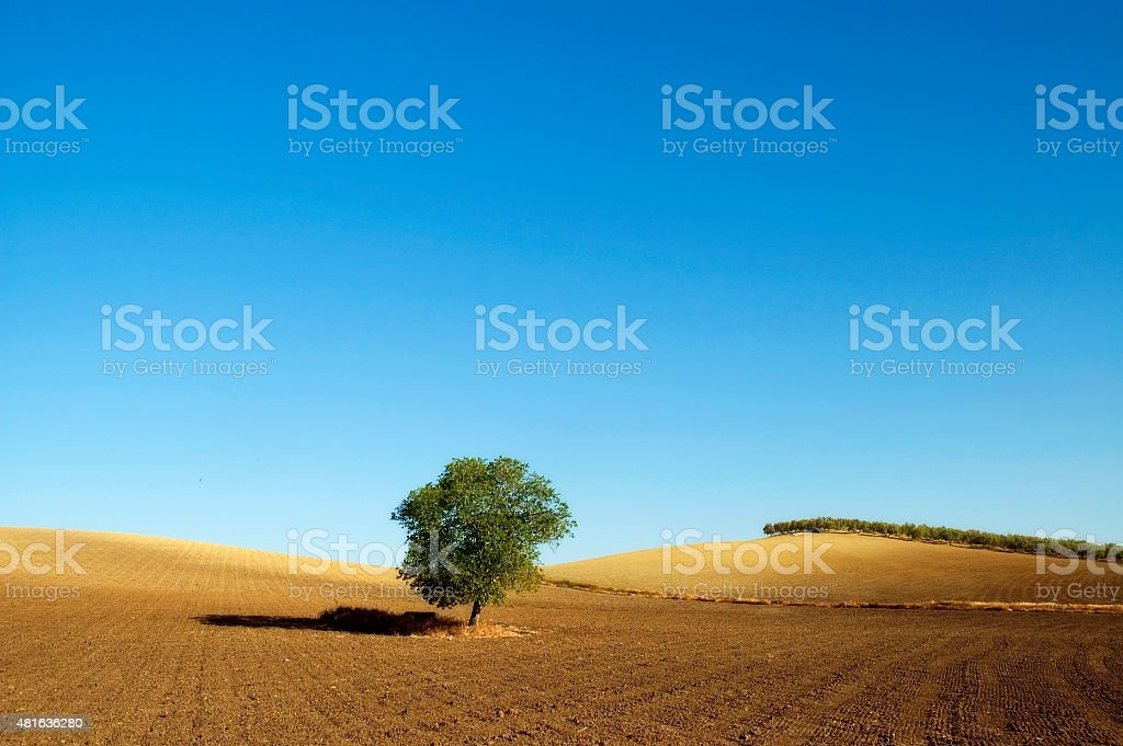 Landscape, lonely Tree near Setenil, freedom, nature backgrounds, Andalusia, Spain stock photo