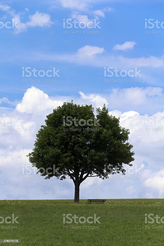 Landscape  lonely tree on green field, Maple with Park Bench royalty-free stock photo