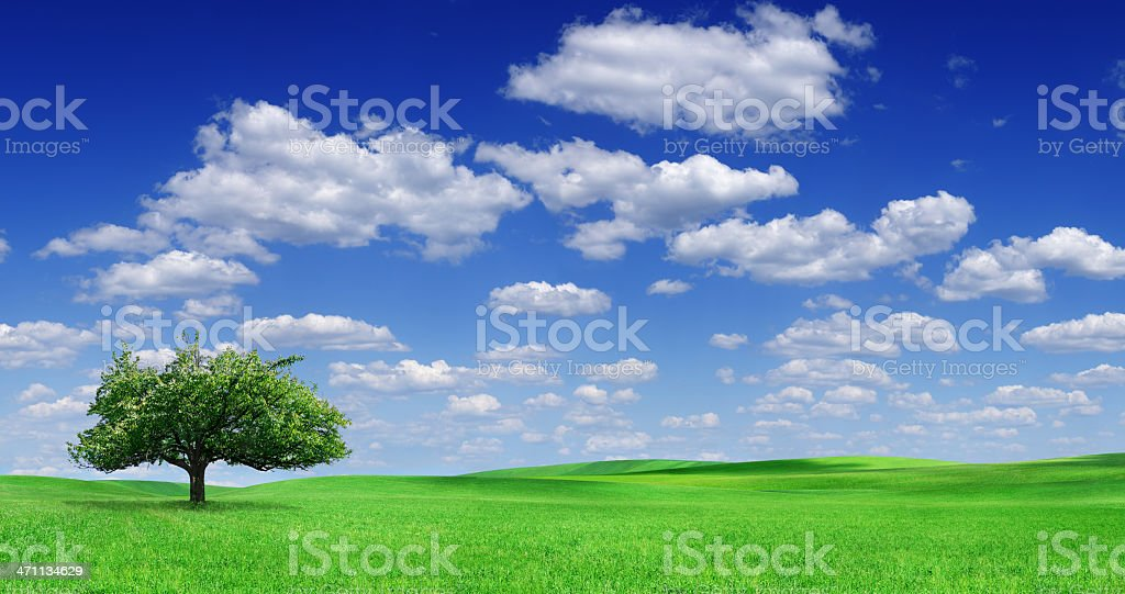 Landscape - lonely tree on green field (XXXL) royalty-free stock photo
