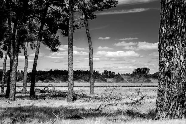 paisaje monocromo - monse del campo fotografías e imágenes de stock