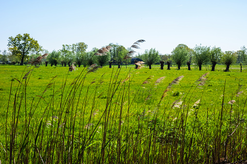 Landscape at Stoutenburg near Amersfoort, Netherlands