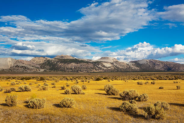 Landscape near Mono Lake stock photo