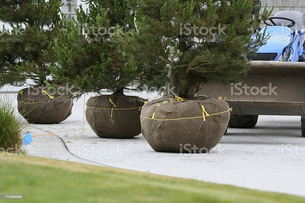 Landscape Nursery Trees royalty-free stock photo