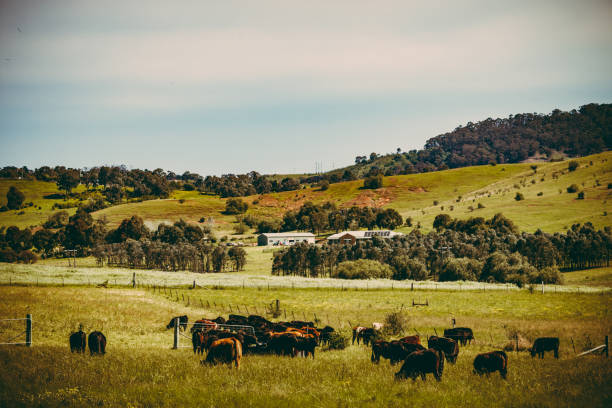 Landscape of a cattle ranch stock photo