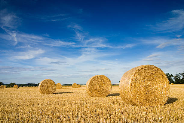 Landscape of a large hay field with numerous straw bales Straw bales on farmland with blue cloudy sky hay stock pictures, royalty-free photos & images