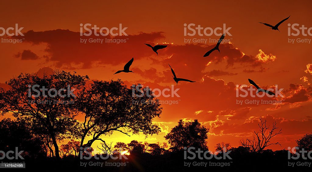 Landscape of Africa with warm sunset stock photo