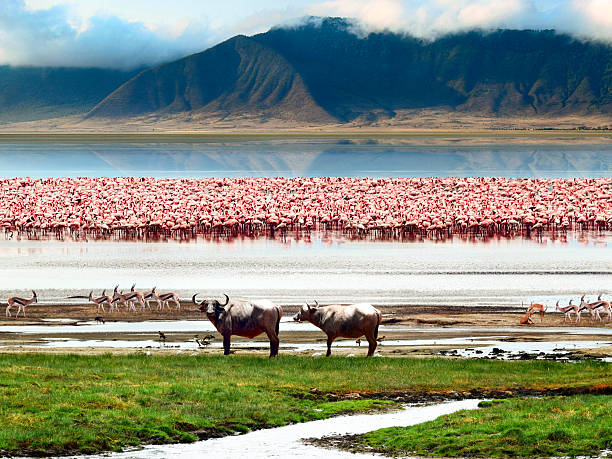 Landscape of African wildlife The African wildlife. Beautiful view of Lake in Ngorongoro Crater, Tanzania. ngorongoro conservation area stock pictures, royalty-free photos & images