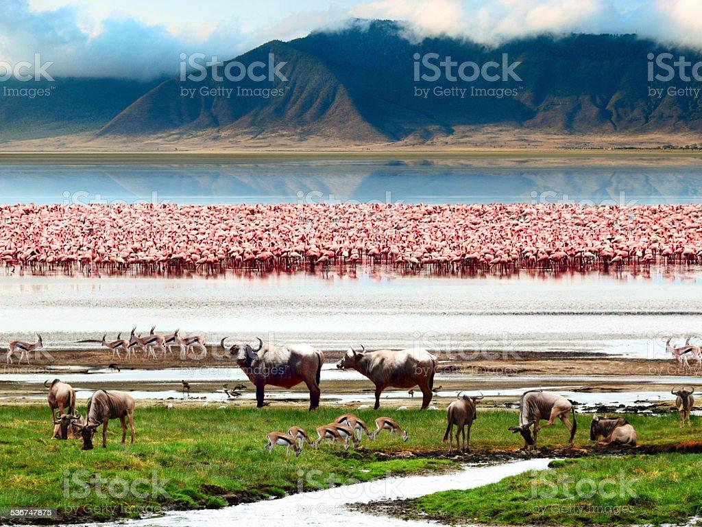 Landscape of African wildlife stock photo