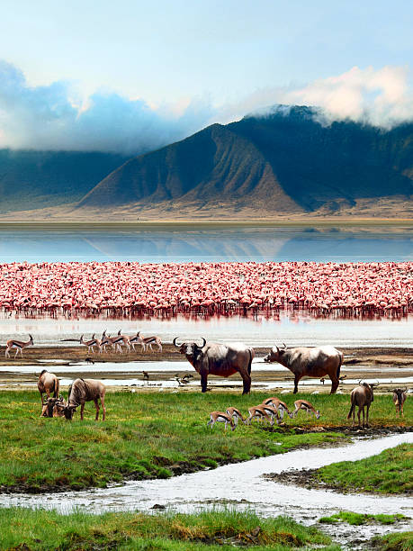 Landscape of African wildlife stock photo