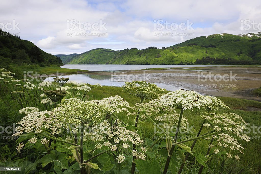 Landscape of an estuary royalty-free stock photo