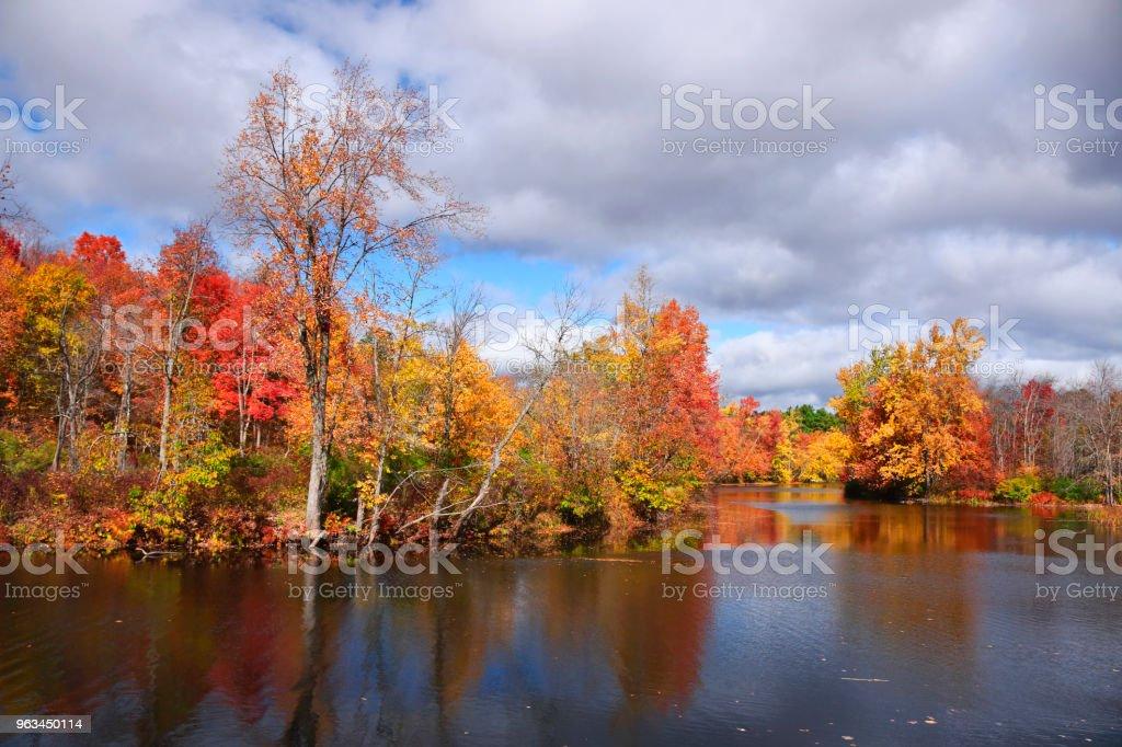 Paysage de couleurs de la feuille d'automne - Photo de Arbre libre de droits