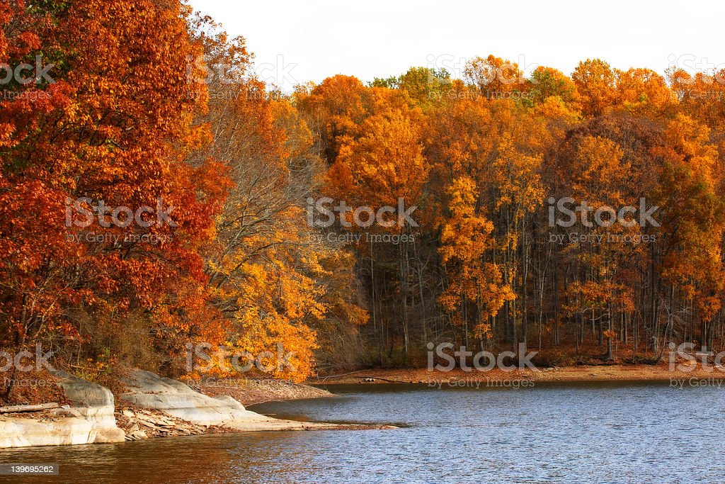 Landscape of autumn orange leaves on the water royalty-free stock photo