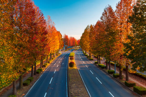 Landscape of autumn tress with a leading road in Tsukuba, Japan