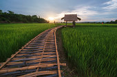 Landscape of bamboo bridge stretches out to the rice field in the evening at Pua district, Nan Thailand