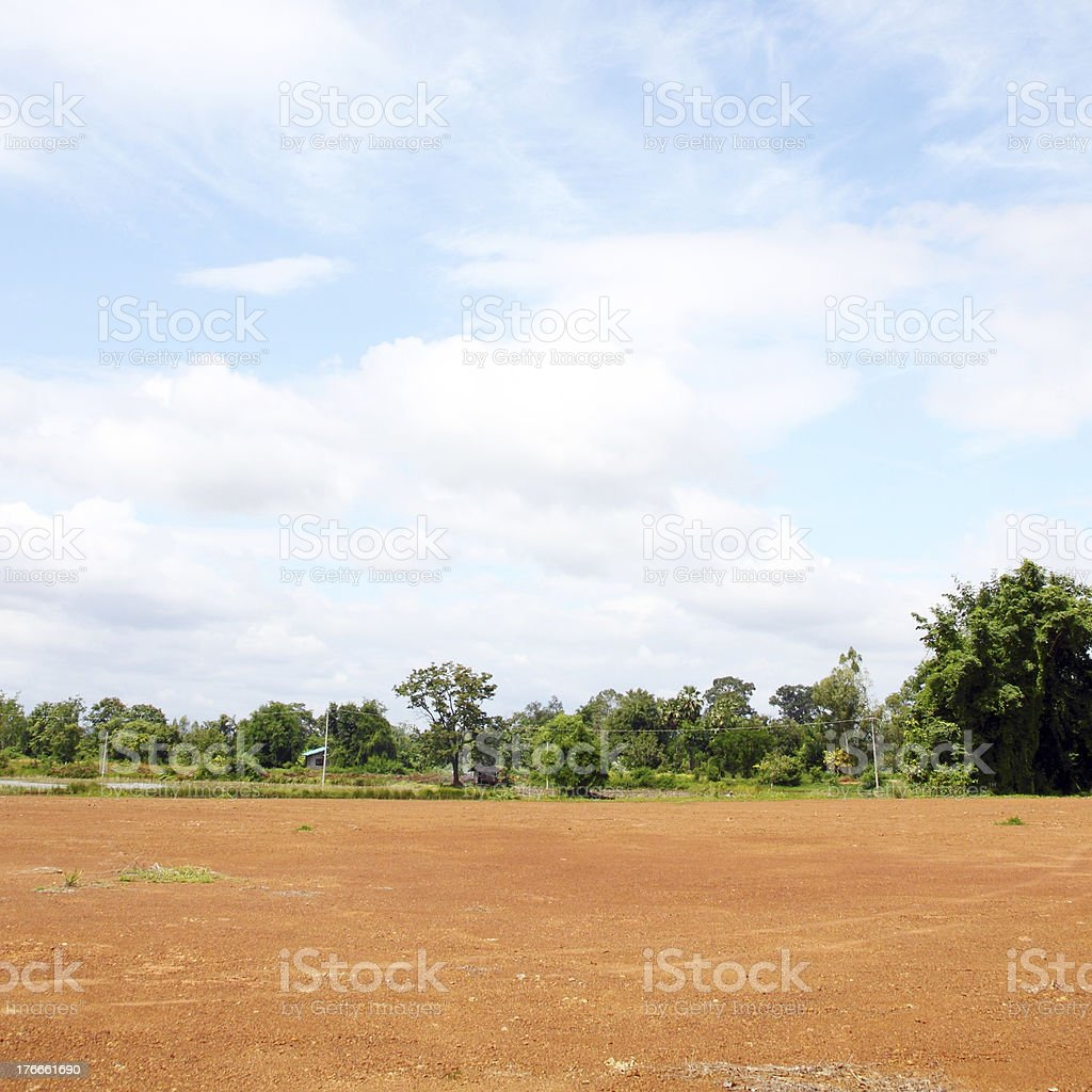 Landscape of Bare Earth and tree royalty-free stock photo