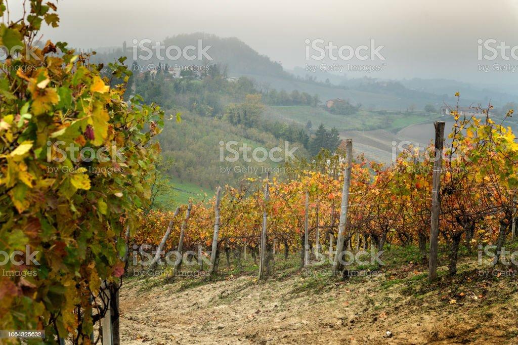 Landscape of Barolo wine region - foto stock
