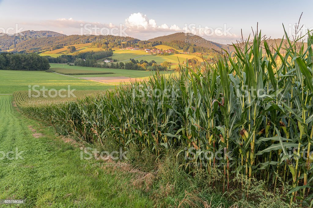 Landscape of bavarian forest with meadow and corn field – Foto