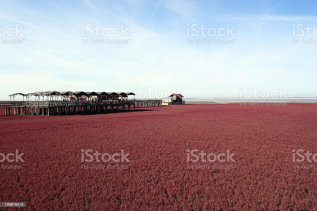 Landscape of beach stock photo