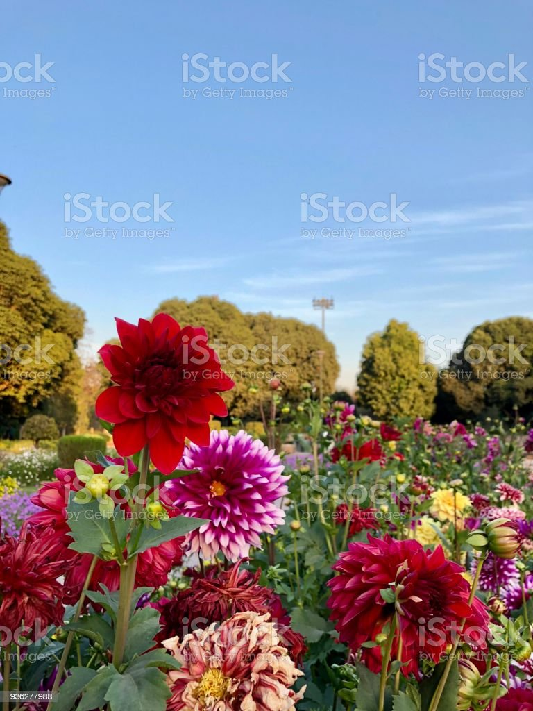 Landscape Of Beautiful Blooming Flowers Gardennew Delhiindia Stock