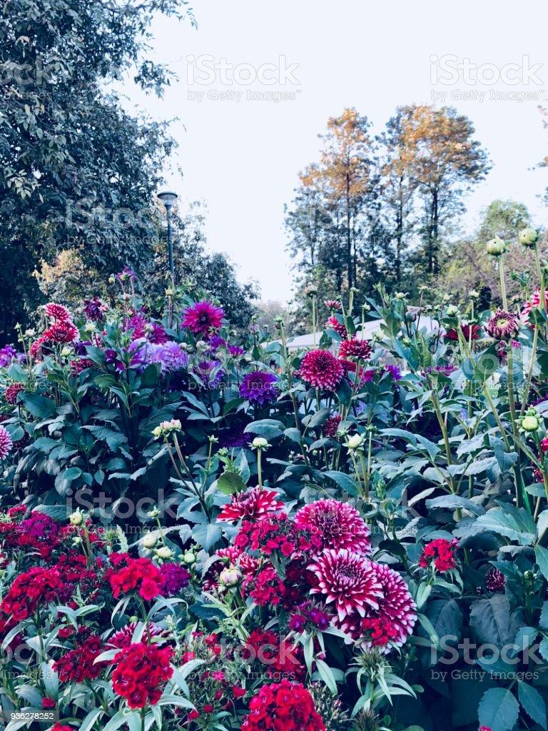 Paysage Du Magnifique Jardin Fleuri De Fleurs New Delhi Inde
