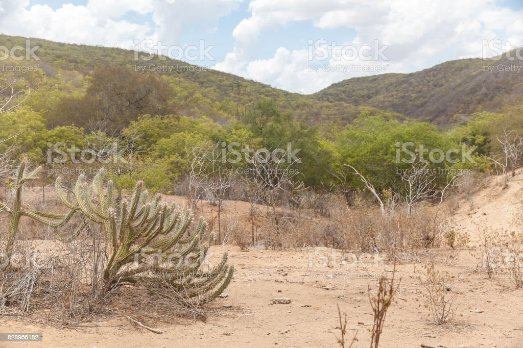 Landscape of caatinga biome, with its typical plants stock photo
