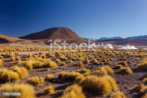 landscape of Central andean dry puna grass and smoke columns in the background in the sunrise at 4261.6 msm at Geysers of Tatio at San Pedro de Atacama - Guatin - Linzor, Calama in Antofagasta region (CHILE)
