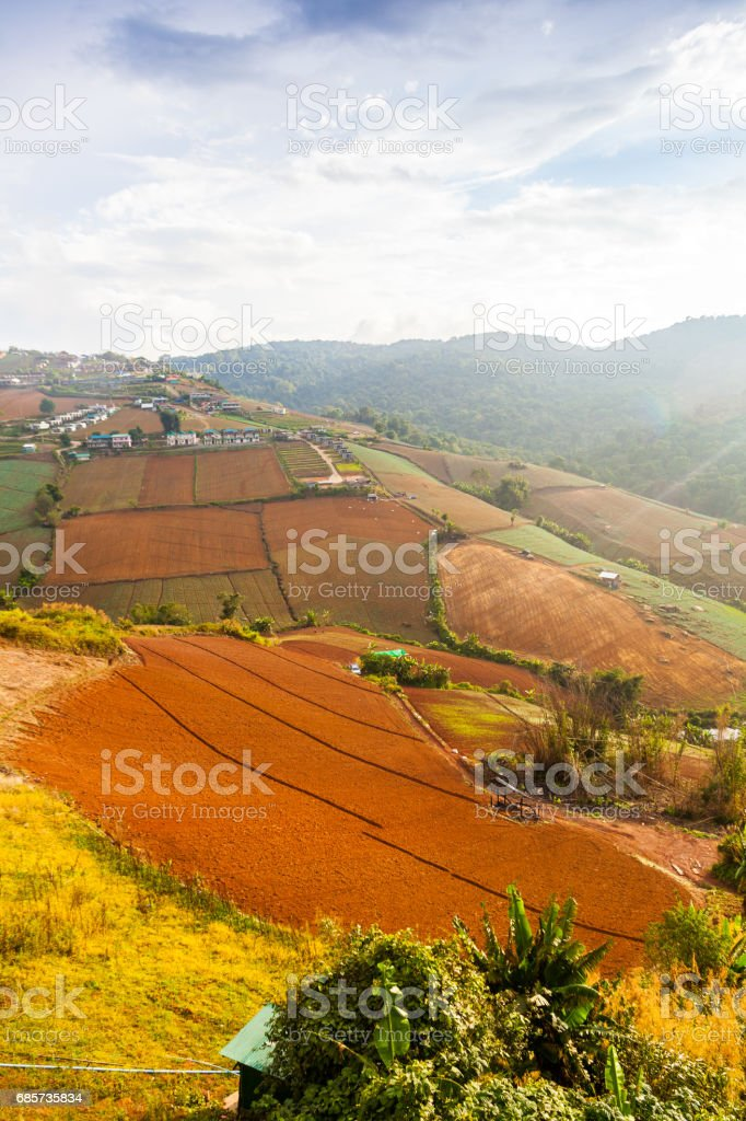 Landscape of Chinese Cabbage Farm at North of Thailand royalty-free 스톡 사진