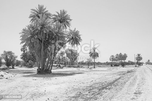 istock landscape of cluster of date trees in a village 1160536948