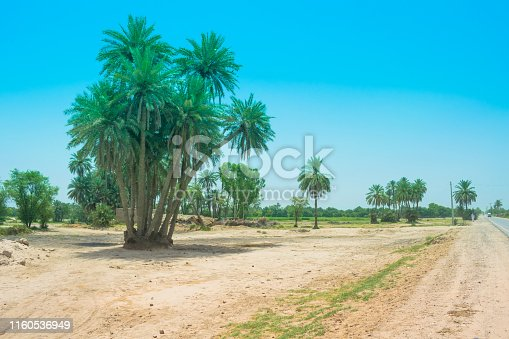 istock landscape of cluster of date trees in a village 1160536949