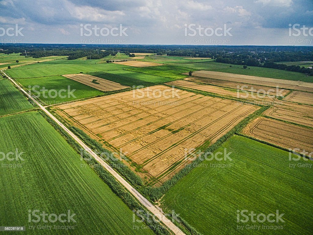 Landscape of Cornfield stock photo