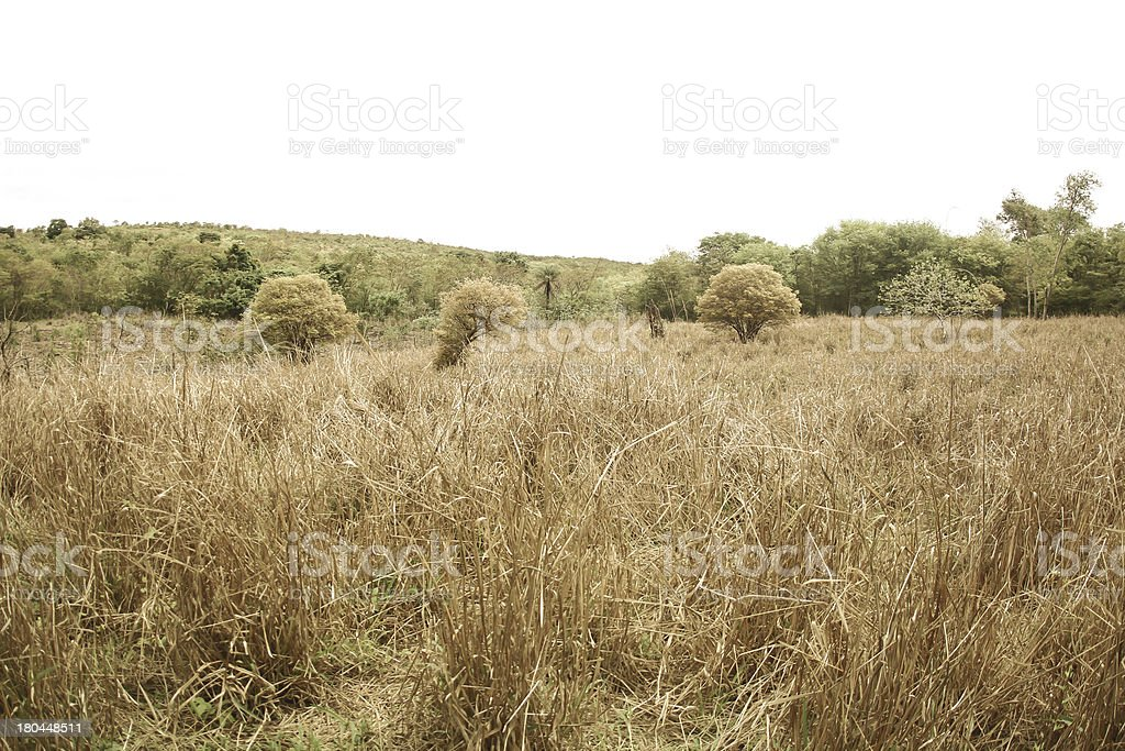 landscape of countryside stock photo