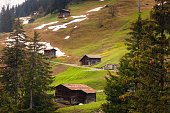 Landscape of Countryside Scenery With Cattle Cow at Swiss Alpine, Switzerland., Agriculture and Livestock Farming.