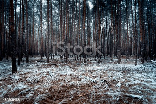 Toned landscape of dark forest covered by snow