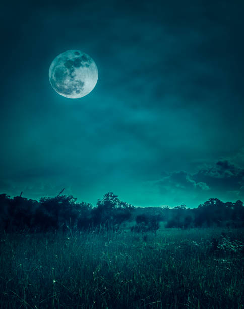 Landscape of dark night sky with clouds. Beautiful bright full moon above wilderness area in forest, serenity nature background. stock photo