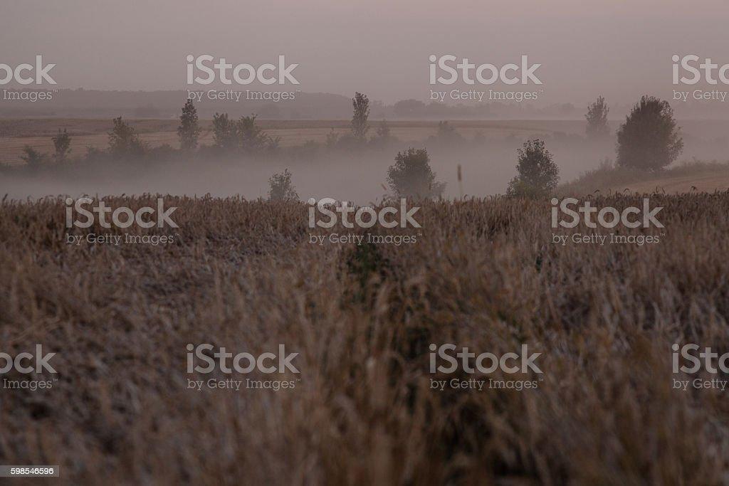 Paysage de brouillard épais dans le champ photo libre de droits