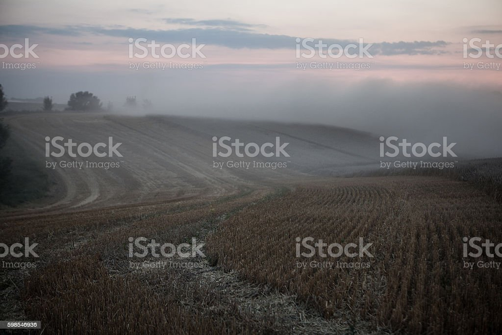 landscape of dense fog in the field stock photo