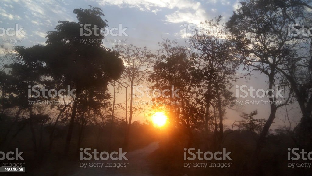 Landscape of Dooars Forest, West Bengal - Royalty-free Environment Stock Photo