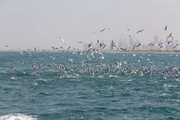 Landscape of Dubai city skyline with birds catching fish in the sea stock photo